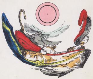 Vertekend beeld en het spel met de spiegel-anamorfosen