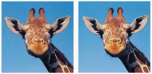 Zien en doen is geloven - door te experimenteren met illusies (2)