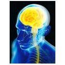 Ons brein staat centraal in educatieve tentoonstelling (2) - 2